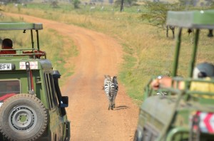 We have seen a zebra!